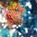 fall into colour by TrishaMonsterr