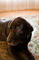 Puppy with Eyes Open by robb-nelson