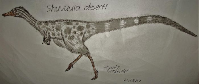 Shuvuuia deserti by Tim64