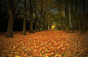 autumn tunel by AdrianaKH-75