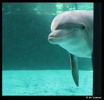 Dolphin outside my window by Lunchi