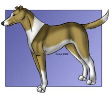 Smooth Collie by tailfeather