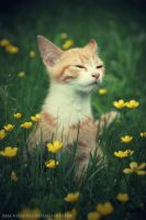 flower kitten II by blackseagullPhoto