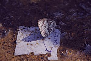 Butterfly on Wet Paper. by claustrofobia