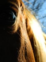 Eye See You by DannersS2