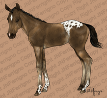 Appaloosa Colt by JNFerrigno