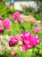 Pink Flower things by The-Lighted-Soul