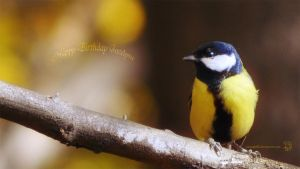 A great tit song by XanaduPhotography