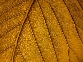 Leaf detail by Robgbsn
