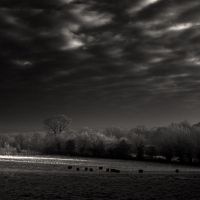 Eleven sheep by DenisOlivier