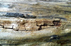 Stock Texture - decayed wood IV by rockgem