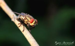 Fly - First shots with Canon 60D by RDography