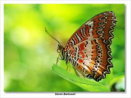 Butterfly XX by ScoobyUSA
