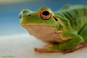 Kermit at the pool 4 by jochniew