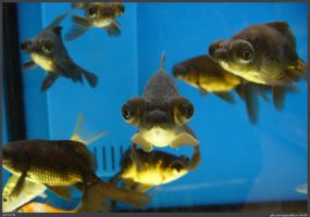 Fish Stock 0072 by phantompanther-stock