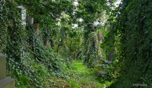 14 Gravestones Covered In Ivy by Estruda