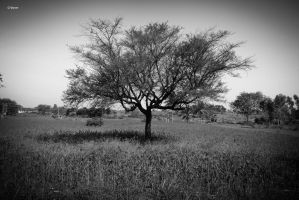 Lonely Tree by YadavThyagaraj