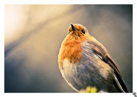 robin of patience II by bexa