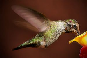 Another Humming Bird by prologic77