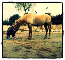 My life thanks this horse by equusalmuh