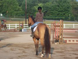 Horse show stock 5 by shush-stock