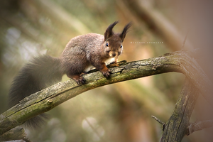 Forest Squirrel by DREAMCA7CHER
