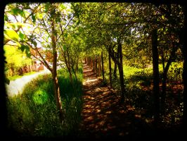 Green way by Django97