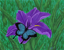 Iris and the Butterfly by sgtgarand