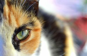 In the cat's eye by CandiiiLuv