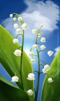 May lillies by Alkven