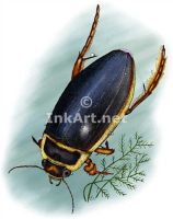 Great Diving Beetle by rogerdhall