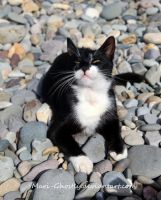 cat on the beach by Mari-Ghostly