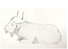 Water Buffalo by Robear