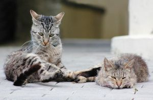 stray cats by AmandaBlack