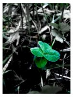 Four Leaf Clover by darkstarlight
