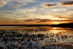 Camargue Sunset by Oaken-shield