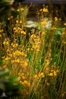 Yellow by DraconPhotography