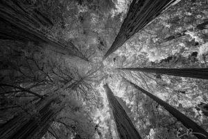 Among Giants II by eprowe