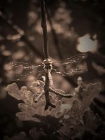 DRAGON ( SEPIA ) by ANDYBURGESS