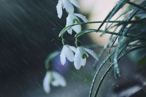 spring rain by violetkitty92