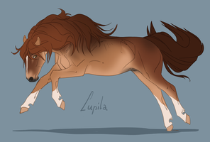 Flash Auction - Lupila by abosz007