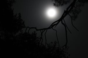 full moon in the woods by AleAndR087