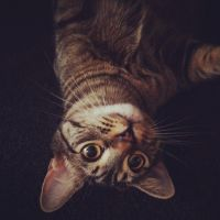 Upside down Francis by AnnieGetYourGunn