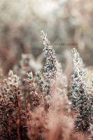 little coloured leaves by papayasweet