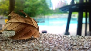 A Broken Leaf by IftikharNaseem