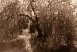 willow on the lake by Cazamelia