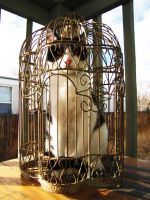 Cat in a Bird Cage by alekitty86f