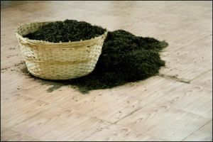 A Basket of Tea Leaves by Cleonor