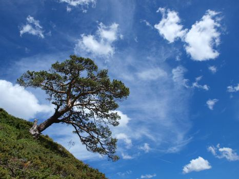 The tree and the sky by Pixelmenteur