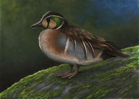 Baikal Teal by EWilloughby